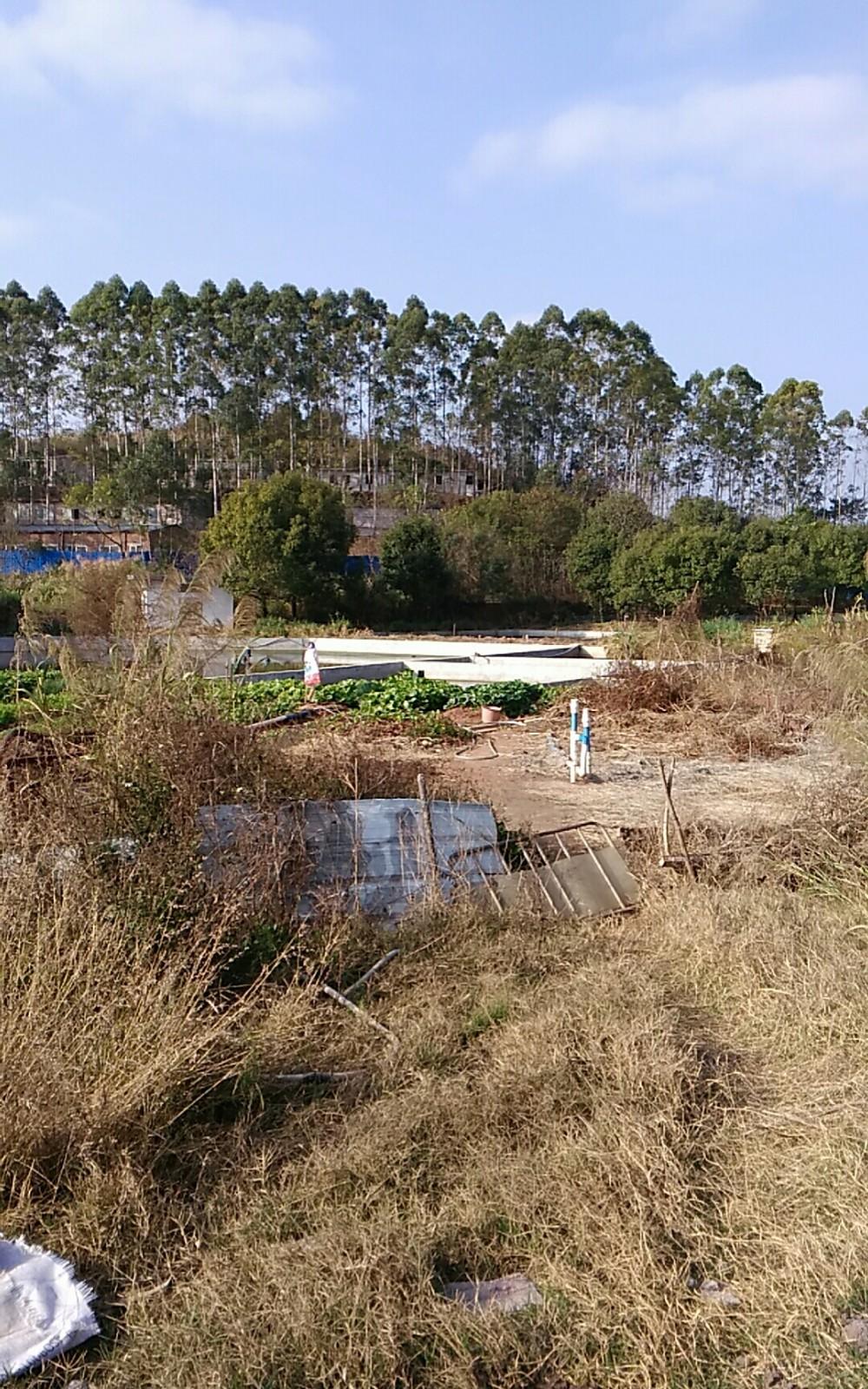 广东省菜篮子工程始兴均航生猪基地