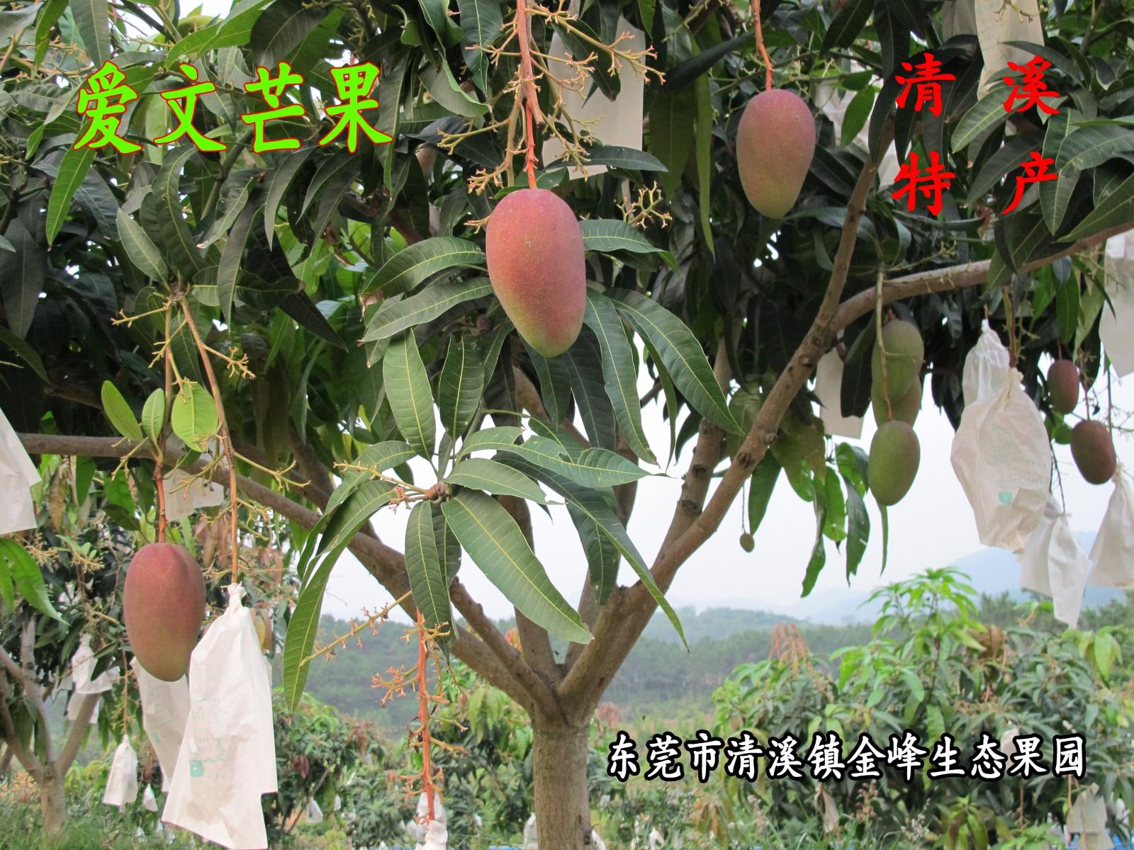 广东省菜篮子工程东莞金峰水果基地